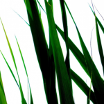 brin d'herbe 3